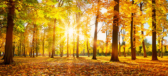 Hvordan plejer vi os selv i efteråret?